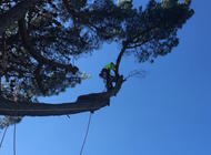 Out on a limb - Arborist services by DVH Maintenance