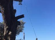 Branch removal - Arborist services by DVH Maintenance